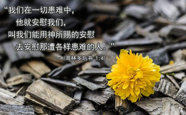 用神所赐的安慰去安慰那遭各样患难的人