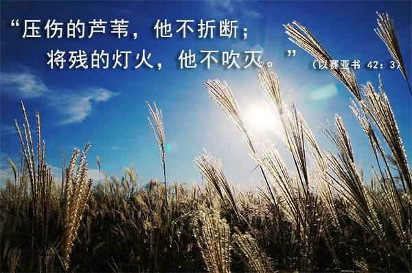 Image result for 诗65:11